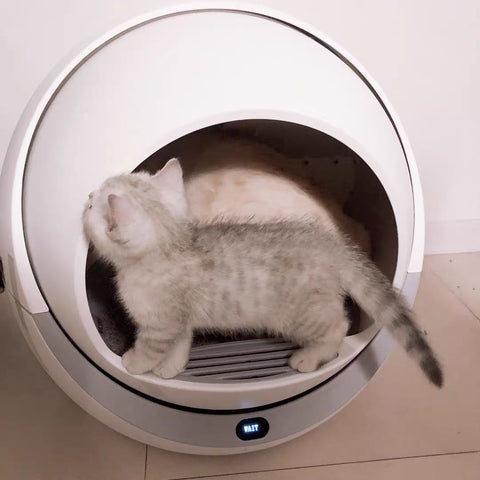 How Can I Train My Cat to Use the Litter Box?