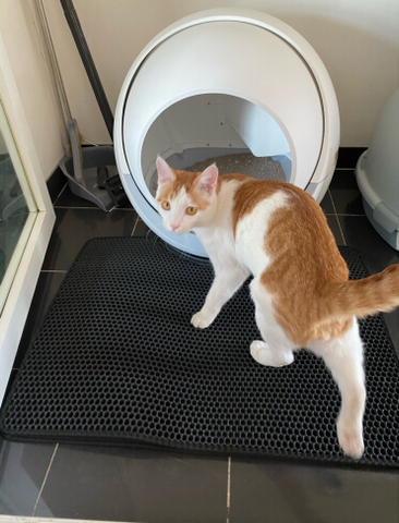 Customer Images: Petree Self Cleaning Litter Box For Multiple Cats and Large Cats
