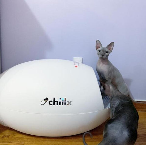 8 Best Self Cleaning Cat Litter Boxes 2020-Chillx