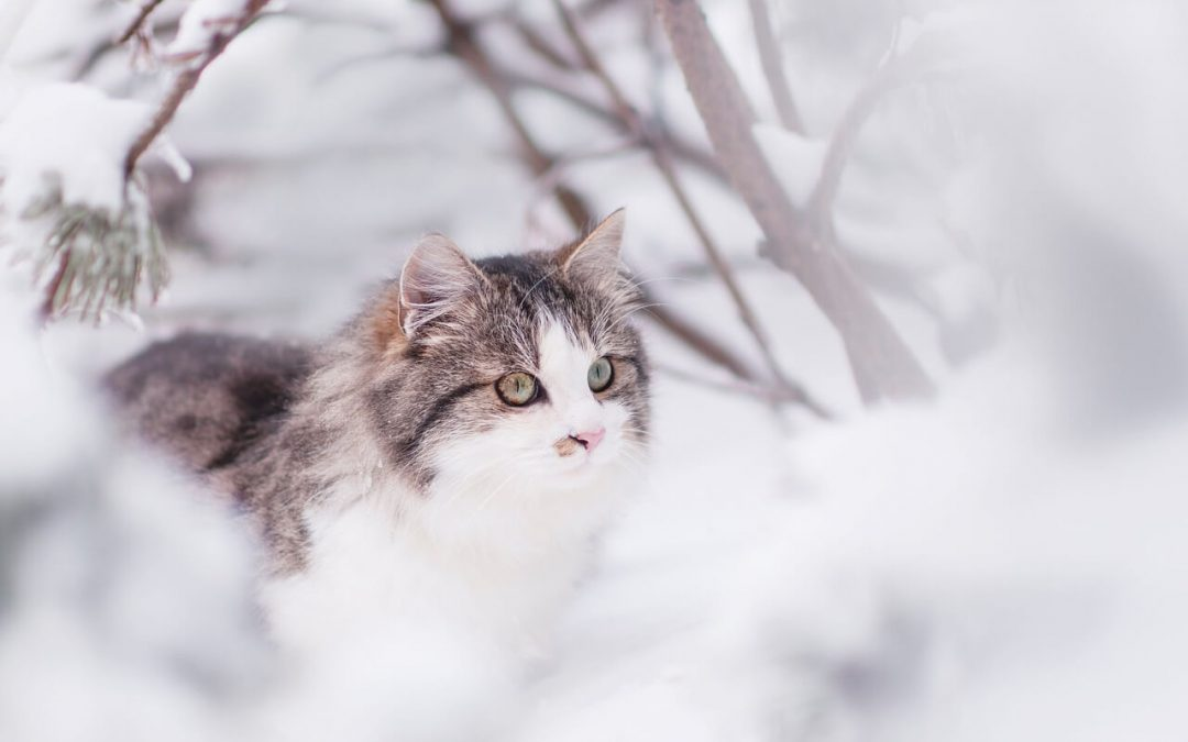 Winter Tips to Keep Your Outdoor Cat Safe