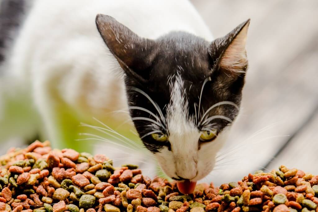Cat Food Nutrition - The Benefits of Raw Cat Food
