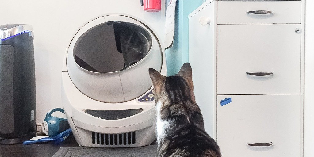 How To Train Your Cat to Use an Automatic Litter Box