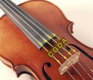 FM Viola Strings Set (A-D-G-C) - Fornaszewski Music Store, Granite City IL 62040 - www.stanf.com
