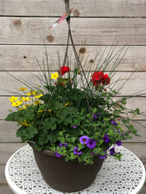 "Load image into Gallery viewer, 13"" Hanging Basket Bidens Sun Mix"