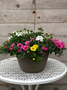 "11"" Hanging Basket Sun Mix"