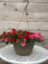 "Load image into Gallery viewer, 11"" Hanging Basket Sun Mix"