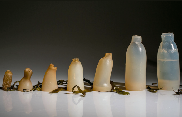 Bottle made out of red algae powder and water by designer Ari Jónsson