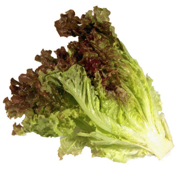 Red Leaf Lettuce ~515g