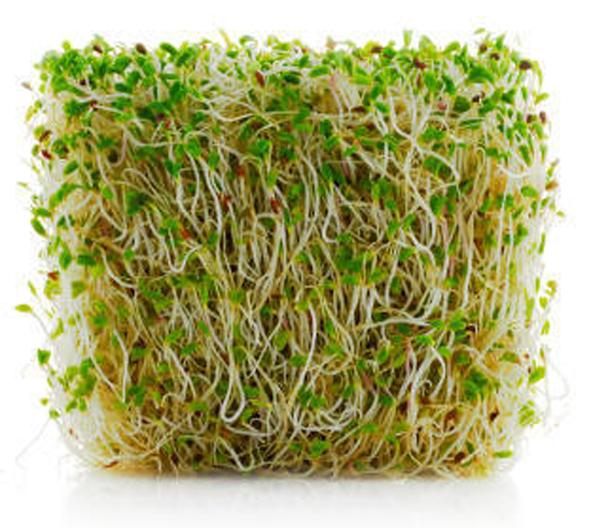 Meadowbrook Farm Alfalfa Sprouts EA
