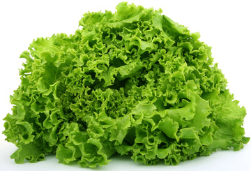 Green Leaf Lettuce Head (~340g)