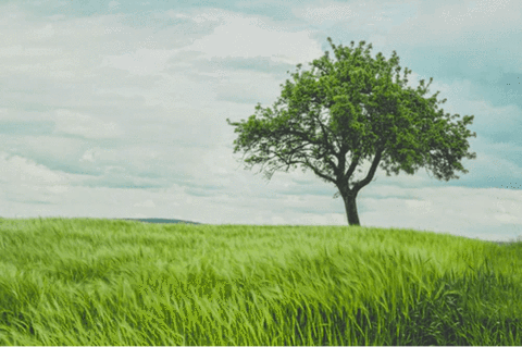 A land of grass with a tree