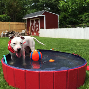 PORTABLE PAW POOL™