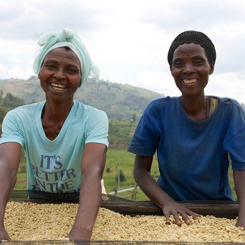 Two women of the Hingakawa Coffee Co-op sorting coffee in parchment as it dries in the sun