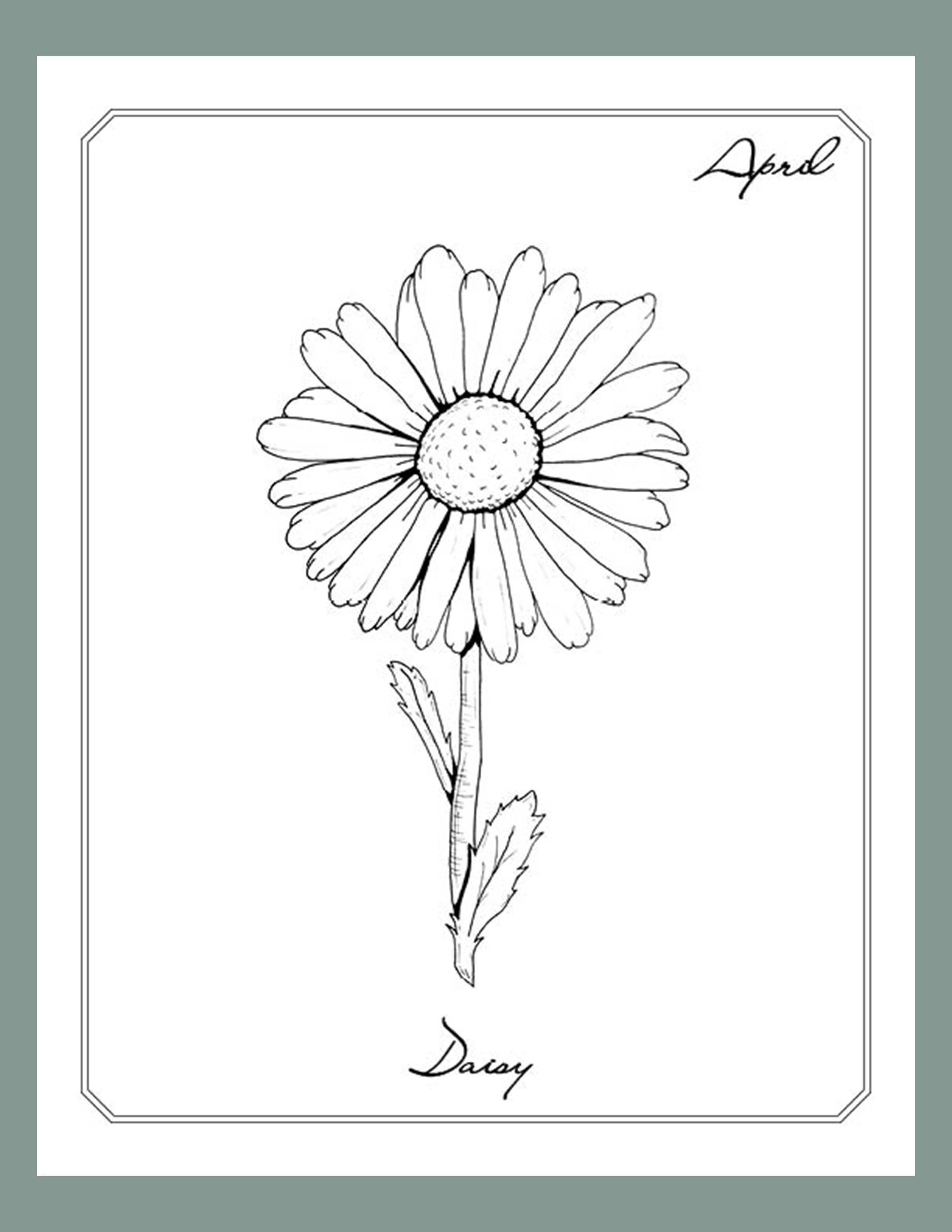 April Daisy Line Art