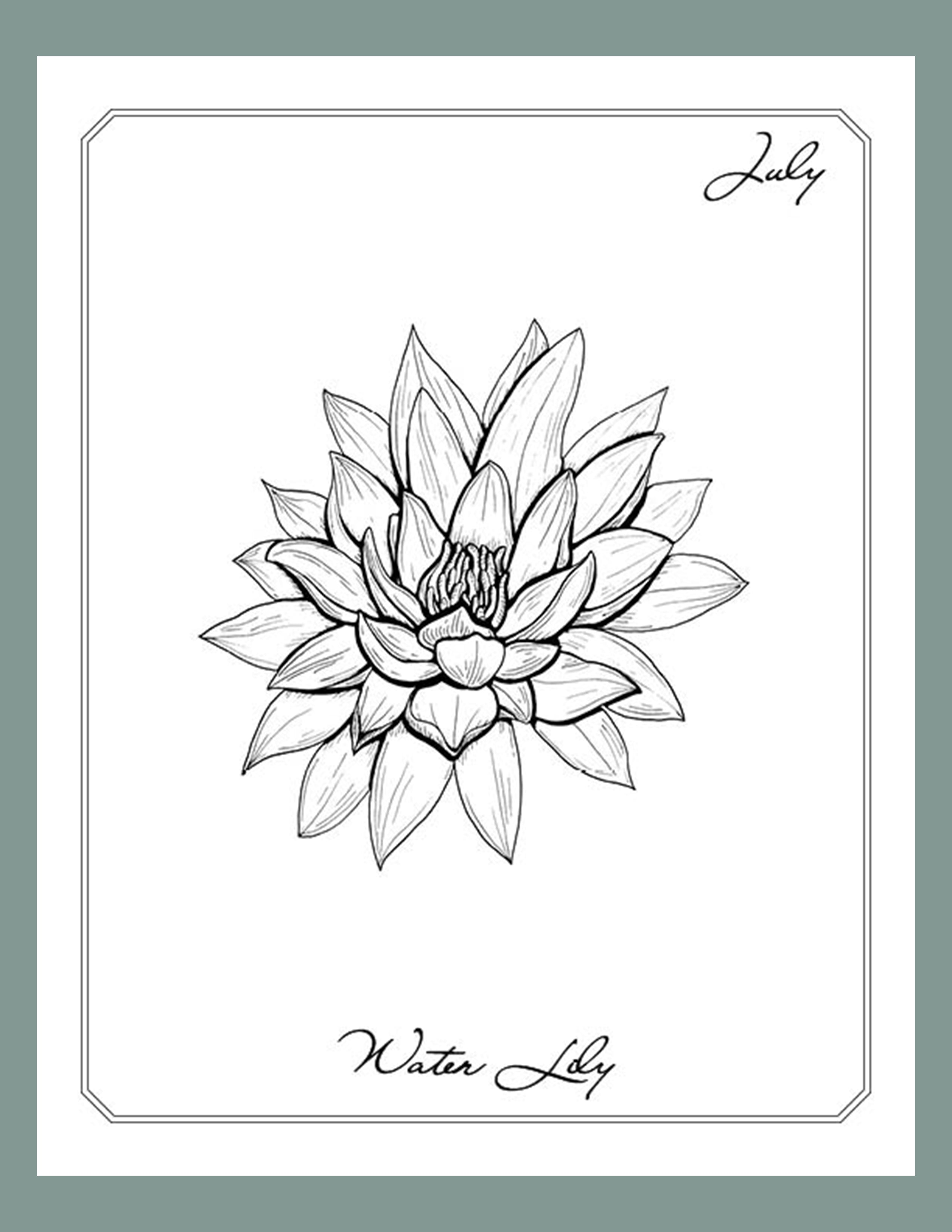 July Water Lily Line Art