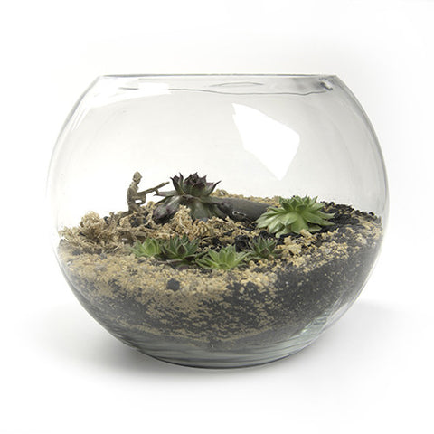 Fish Bowl Terrarium - Greening RMIT