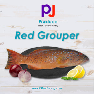 Red Grouper (Whole)