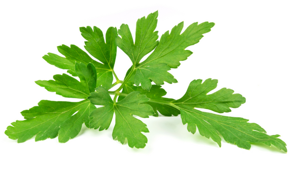 Italian Parsley 30g