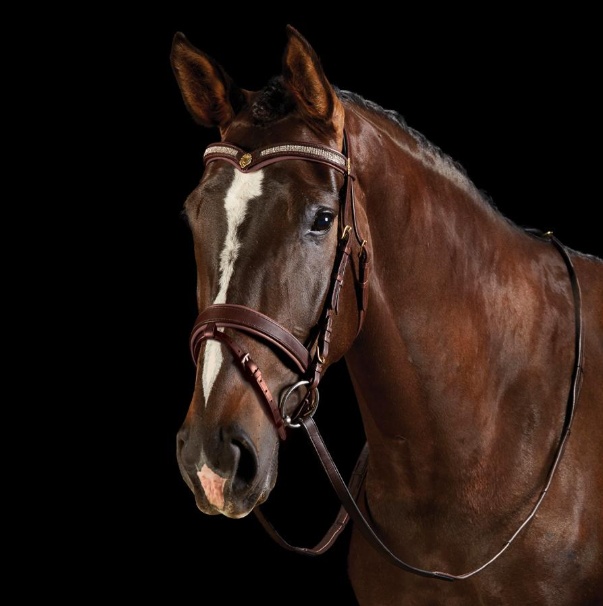 Collegiate Diamante Hano Bridle