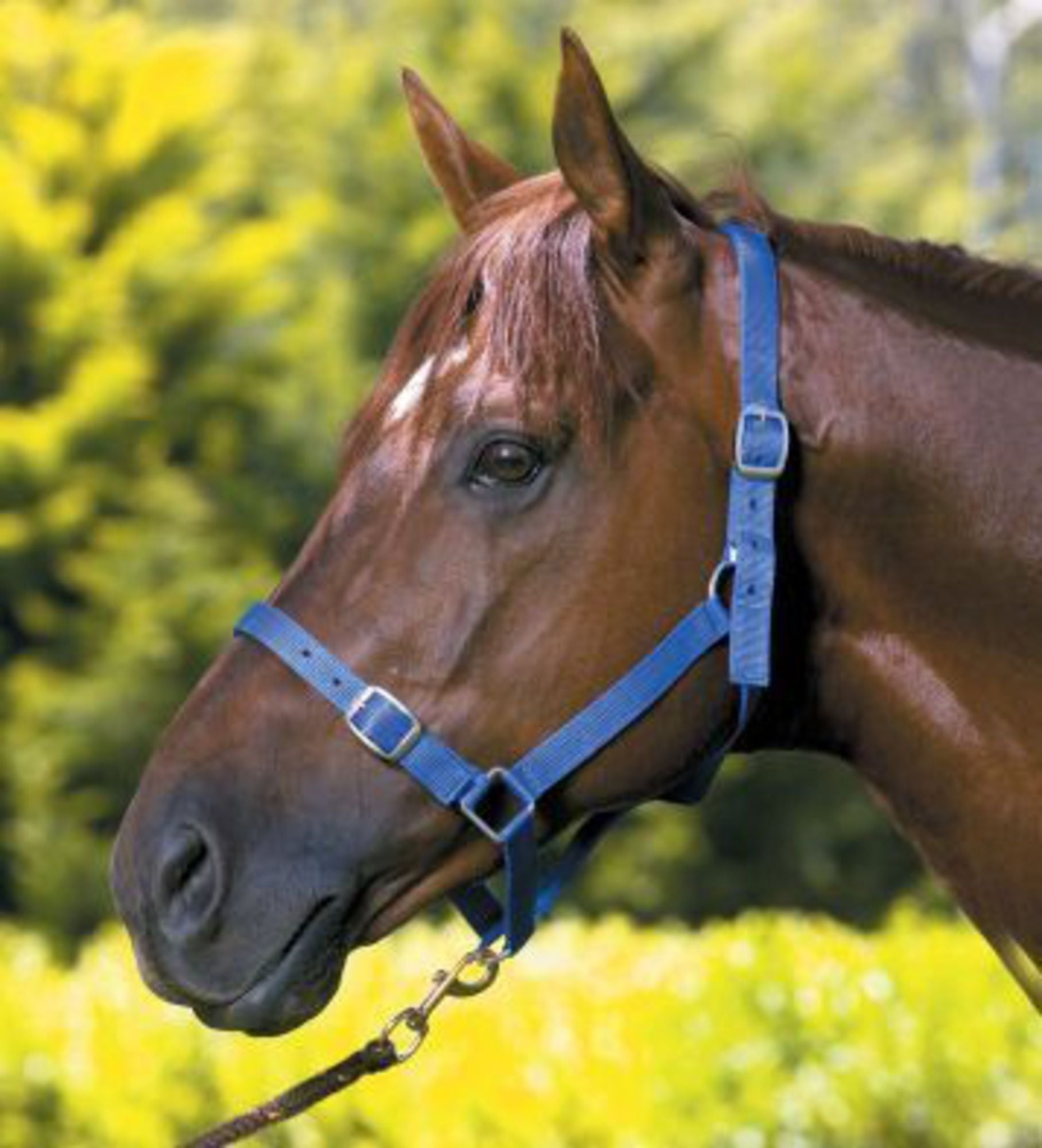 Roma Nylon Nickel Plate Halter