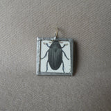 Beetle, vintage scientific illustration, up-cycled to hand-soldered glass pendant