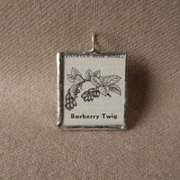 Barberry Twig, plant, vintage botanical dictionary illustration, up-cycled to soldered glass pendant