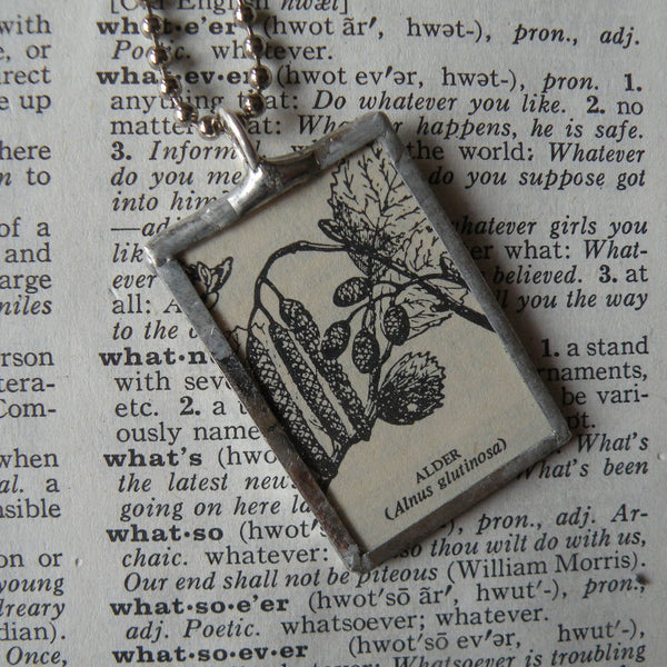Alder tree branch, seed pod, vintage botanical dictionary illustration, upcycled to soldered glass pendant