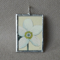 White anemone flower, vintage botanical illustration, upcycled to soldered glass pendant