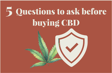 5 Questions you should ask before buying CBD