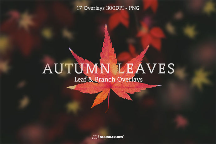 Autumn Leaves & Branch Overlays