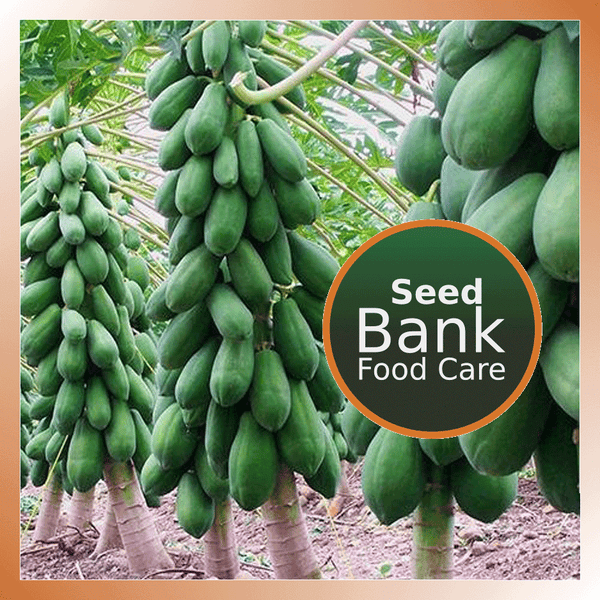 Red Lady Papaya seeds - Food Care INDIA