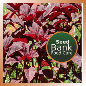 Amaranthus Seeds Red - Food Care INDIA