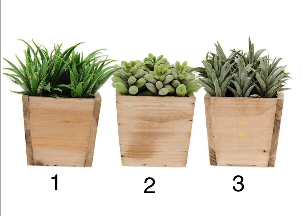 "5"" Assorted Succulents(3 Styles Sold Separately)"