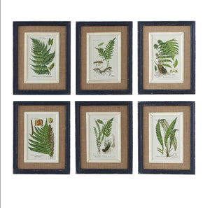 "Black Framed Fern Prints-18""-6 Styles Sold Separately"