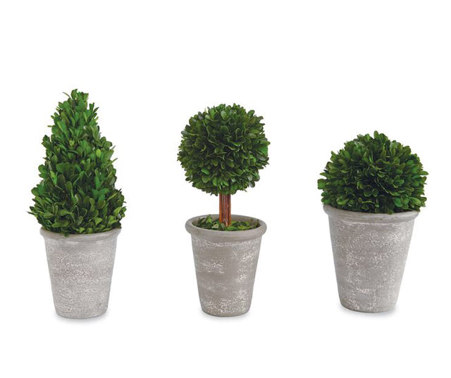 Preserved Boxwood Topiary(3 Styles)