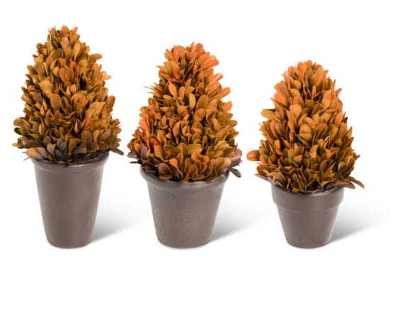 Orange Preserved Boxwood Potted Cone Trees (3 Sizes Sold Separately)