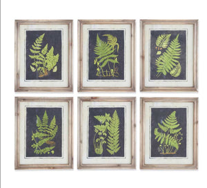 "Natural Wood Framed Fern Prints-16.75""-6 Styles Sold Separately"