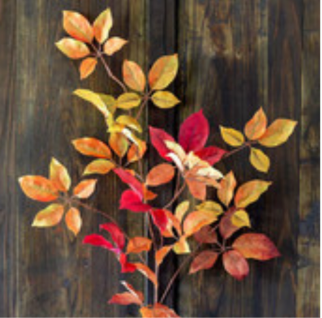 Autumn Virginia Creeper Leaf Spray