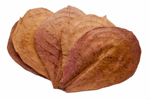 Large Indian Almond Leaves (10 leaves)