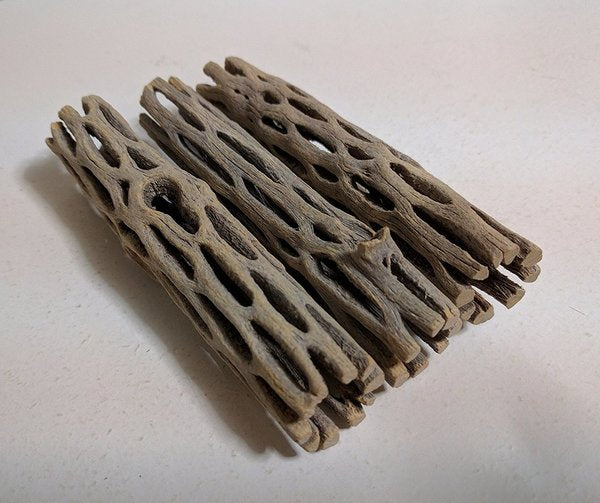 Cholla Wood (1 piece)