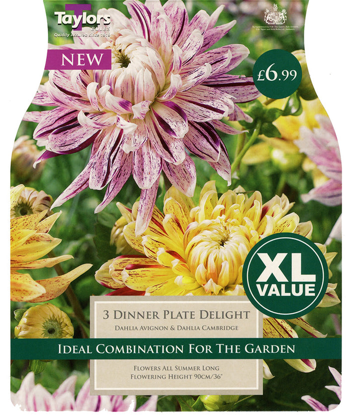 Dahlia - Dinner Plate Delight (Multi Pack)