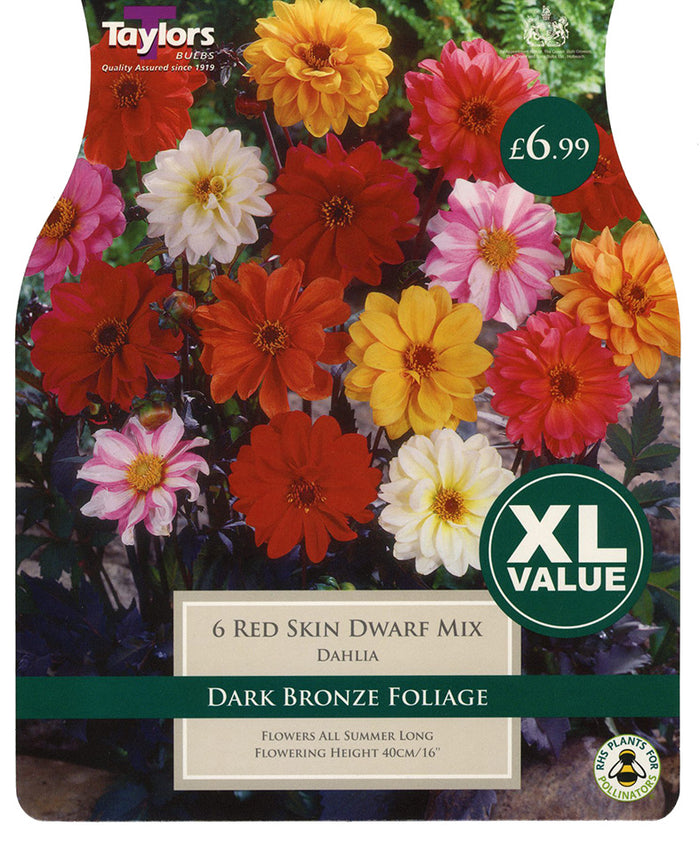 Dahlia - Red Skin Dwarf Mix (Multi Pack)