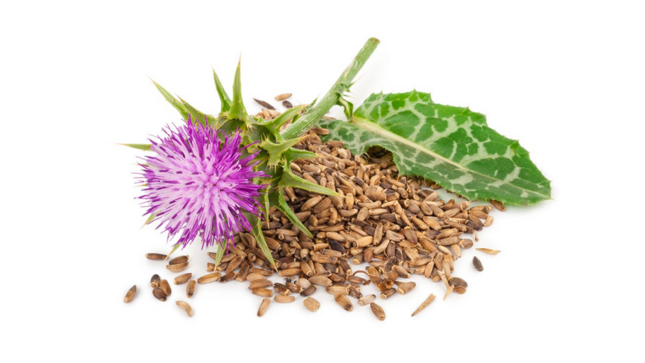 Milk Thistle(Silybum marianum)