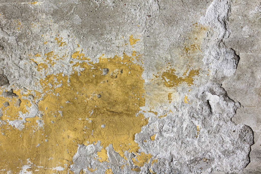 THE DANGERS OF MOLD AND DAMP IN YOUR GARAGE