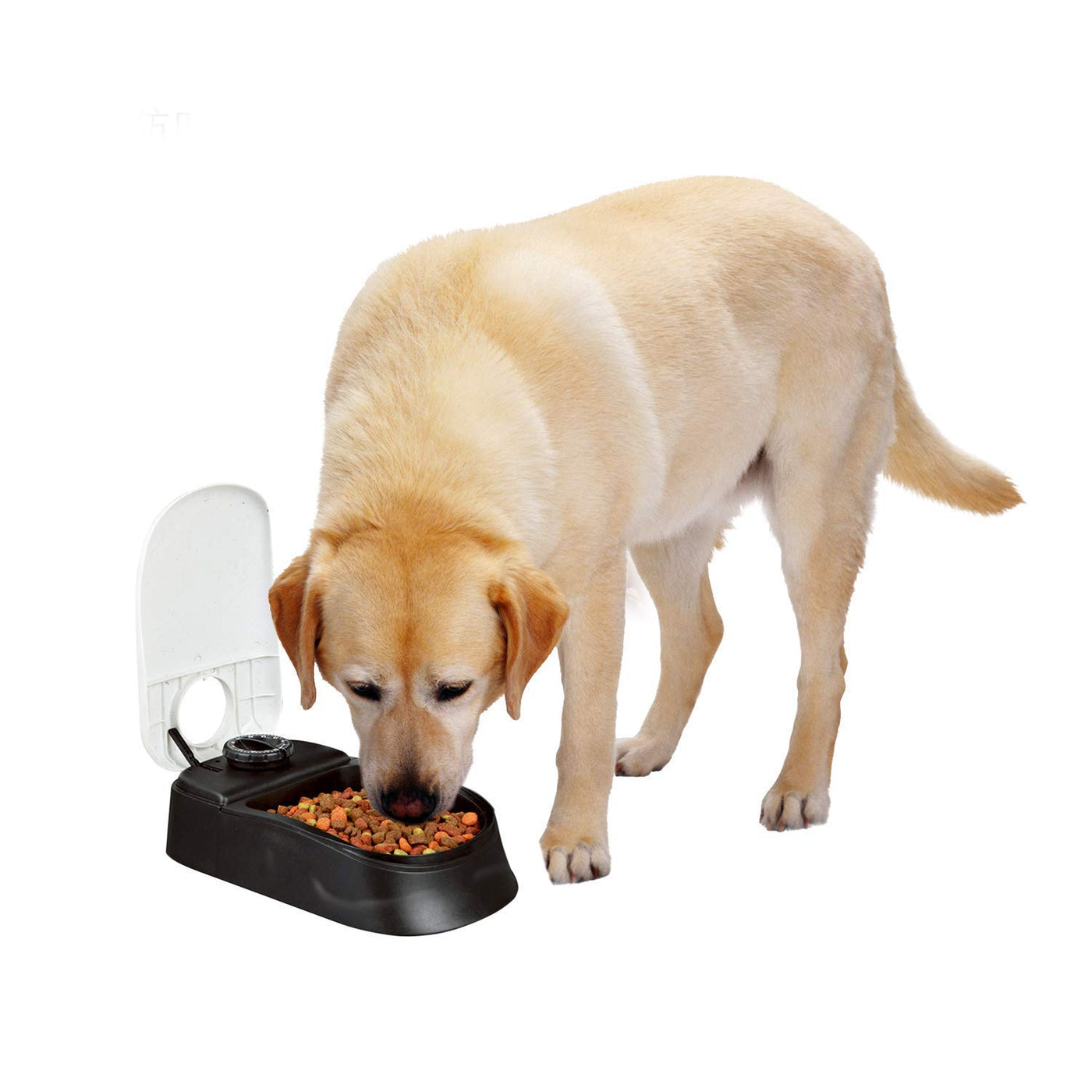 Pawise Automatic Pet Feeder For Dogs And Cats Food Dispenser Station With Timer 100 Bpa Free Dishwasher Safe Great Gift Ideas 1 5 Cup Single Pawsplanet Australia