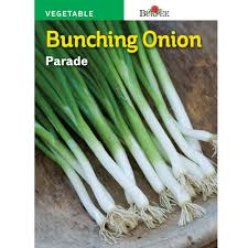 SEED - BUNCHING ONION PARADE - Springbank Greenhouses