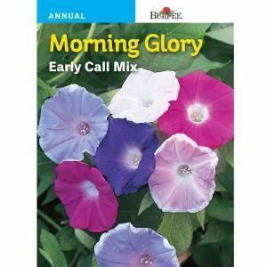 SEED - MORNING GLORY EARLY CALL MIXED COLOURS - Springbank Greenhouses