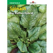 SEED - SPINACH BIG RUFFLES HYBRID - Springbank Greenhouses