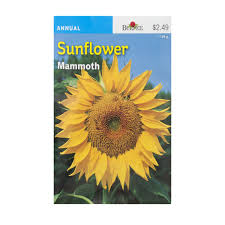 SEED - SUNFLOWER MAMMOTH - Springbank Greenhouses