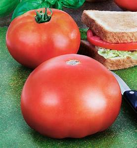 "TOMATO WHOPPER - 4"" and 5.5"" - Springbank Greenhouses"